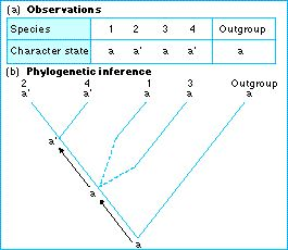 outgroup definition